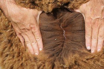 63498c fleece